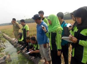 Siswa SMKN 1 Simpang Pematang Sedang Melakukan Pengamatan Di Lahan Cabe