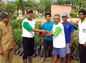 Peremajaan Karet Desa Adi Luhur