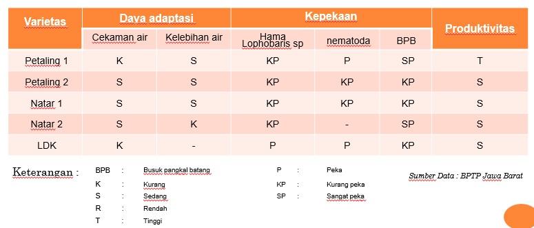 varietas lada indonesia