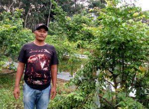 Tanaman Belimbing Milik Bapak Malik Desa Fajar Asri