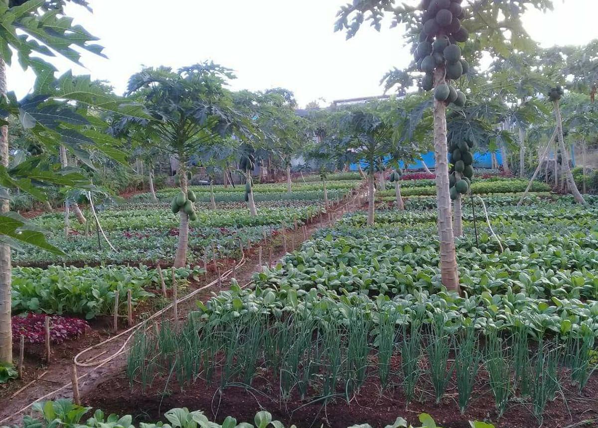 Strategi Usaha Tani dan Agribisnis Menghadapi Pandemi Covid-19