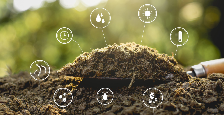 Penggunaan Asam Humat Pada Sektor Pertanian